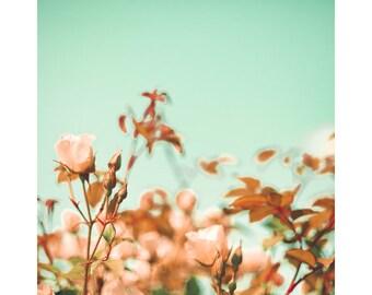 SALE Rose print, rose art, canvas art, large art, flower photography, flower art, flower print, roses, pink wall art, pink art, mint decor