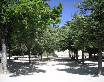 Original Photograph (Matted): Reading Among The Trees - Nimes, France
