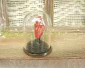 human heart 12th scale