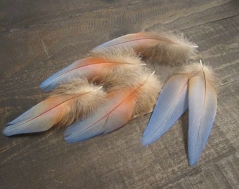 6 Macaw Parrot Feathers ~ Cruelty Free **Use Coupon Code FEATHERS20 and save 20% on all Feathers**