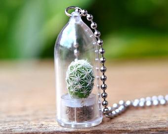 Snowball Cactus Live Terrarium Necklace / Terrarium Jewelry / Nature Necklace / Cactus Necklace