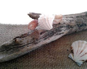 Seashell Hair Clip, Beach Wedding, Coastal Hair Accessories, Natural Shell Hair Barrette, Mermaid Jewel Box, Gift for Teen Girls or Women
