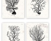 Customer order: Vintage Grey Coral Prints - 8X10