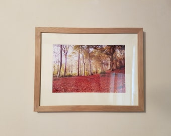 Colemere Woods, Shropshire, Nature, Photography Print - Framed