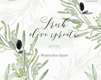 Olive sprouts, olive branches watercolor clipart hand drawn. Romantic wedding, sage green, green branches, wedding invitation, arrangements.