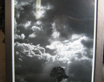 Framed Black & White Photograph - Tree with Clouds