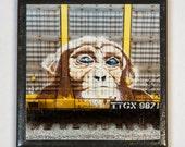 Train art coaster:  Chimp - Train Graffiti. Individually photographed and hand made by Frank Heflin