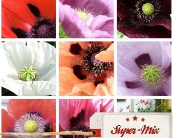 Papaver 500 Seeds, Super mix Poppy Seeds
