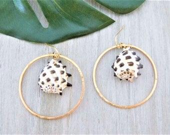 Drupe Shell Earrings, Gold Drupe Shell Earrings, Drupe Shell Hoops, Hawaiian Drupe Shell Earrings, Gold Seashell Hoops, Gold Shell Earrings