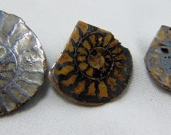 3 Ammonite Fossils, Fossil Jewelry, Ammonite Jewelry, Fossil Cabochon, Rock Collection, Mineral Specimen, Protection, Good Luck, Quartz #60