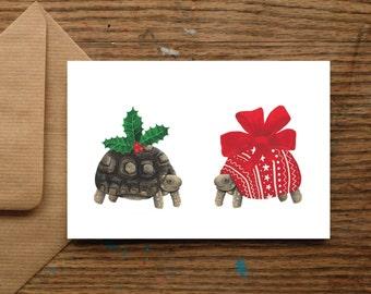 Festive Tortoise | Christmas Cards