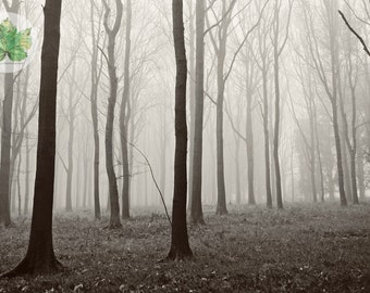 In the Fog, A4 photography print woodlands Damery Gloucestershire black and white
