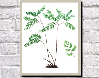 Fern Illustration, Fern Print, Antique Botanical Print, Vintage Plant illustration, Fern Wall Art,  0501