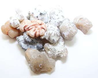 Oregon Snakeskin Agate Shiny Polished Specimen Rock Of Strength & Inner Peace 1 lb. Wholesale Bag #2