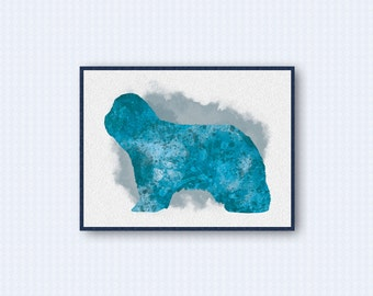 Bearded Collie Watercolor Poster