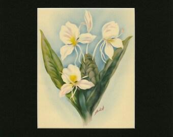 "MATTED Vintage Hawaiian Flower Print - ""White Ginger"" c. 1943 - T.J. Mundorff Book Plate - Botanical Decor - Ready To Frame - 9x12 or 11x14"