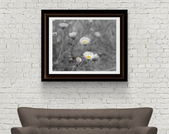 Flower photography - Nature Photograph - Daisies Photograph - Original Fine Art - Digital Download - Black and White - Instant Download