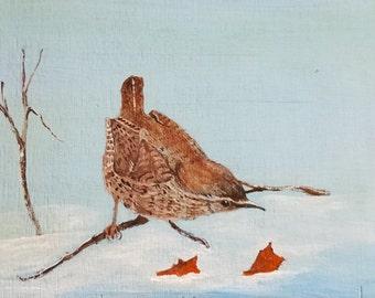 Wren Bird In The Snow