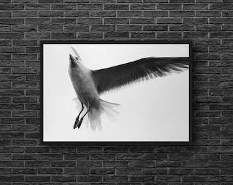 Gull Print - Seagull Photo - Gull Photography - Bird Photo - Minimalist Print - Black White Photo - Nautical Wall Art - Coastal Wall Decor