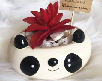 Succulent Pandas - live plants - gift - party favors - greenery - baby showerd, bridal showers, wedding favors, party favors - kawaii