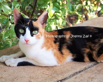 Stray cat from Egypt's El Nabatat Island