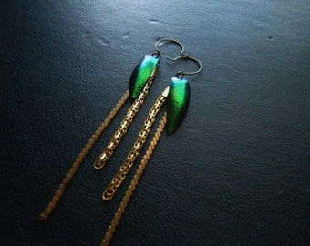 heart of darkness - jeweled beetle wing gold chain earrings - natural taxidermy jewelry