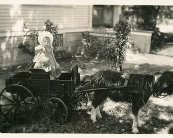 vintage photo 1914 Beautiful Baby Girl Matching Prairie Doll Goat Cart