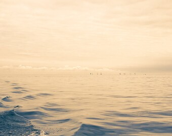 Sailboats on Lake St Clair Fine Art Photograph on Metallic Paper