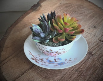 Succulent arrangement in a vintage 1890's tea cup and saucer, succulent home decor, feminine office decor, farmhouse chic flower arrangement