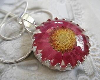 Purple Daisy Pressed Flower Crown Pendant Beneath Glass-Symbolizes Loyal Love,Innocence-April's Birth Flower-Nature's Wearable Art