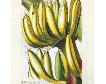Banana Plant Print Book Plate SALE Buy 3, get 1 Free