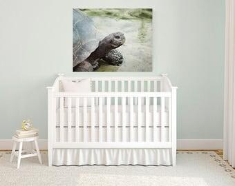 turtle art, boy room art, canvas wall art, turtle print, children room, large wall art, toddler room decor, reptile decor, canvas print