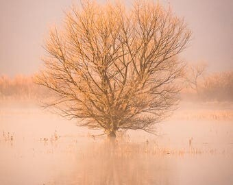 Tree at Sunrise in Fog