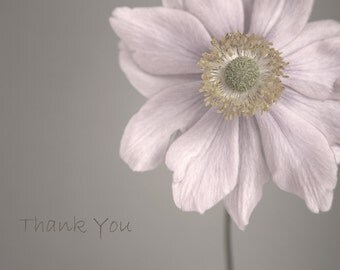 Flower Photo Card, Flower Note Card, Flower Thank You Card, Floral Greetings Card, Pink Card, Japanese Anemone Note Card, Thank You Notelet