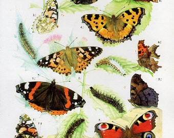 1960 Butterfly Print, plate 49 Vintage Antique Book Plate prints, 6 butterflies insects nature art illustrations