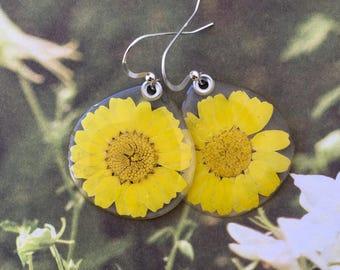 Real yellow daisy earrings