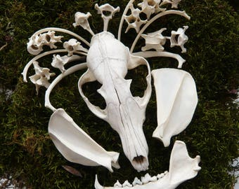 Reserved for Nuzza Bulla Real Fox Skull and bones set