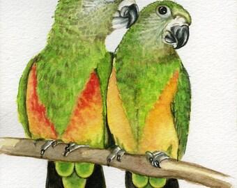 Senegal Parrots, 5x7 print from original watercolor painting, art & collectables,wall art, home decor,birds,animals, fine art, earthspalette