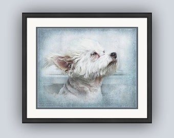Dog Portrait, Sweet Cute White Chipoo, Chihuahua Poodle Mix, Pastel Colors, Little White Dog Puppy, Fine Art Photography Print