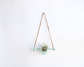 mini - clear glass airplant swing with leather cord for hanging - plant wall hanging