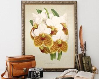 Botanical Art Print, Vanda Sanderiana Print, Orchid Print, Orchid Botanical Print, Vanda Art Print, Vintage Botanical Reproduction FL094