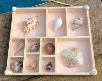 Seashell Wall Decor | Etsy