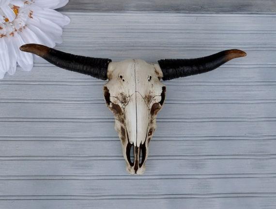 Texas longhorn wall decor