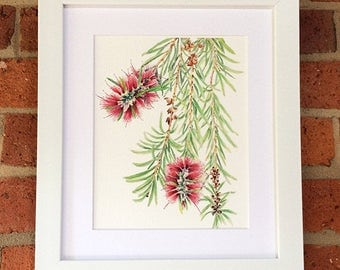 8x10 inches watercolour print of Bottlebrush branch - Australiana flora botanical print showing red flowers of Callistemon tree
