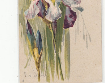 A/S C Klein Beautiful Study Of An Iris Wispy/Impressionistic Undivided Back Antique Postcard