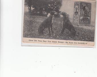 """Unique Advertising Antique Postcard Two Greyhounds Nose To Nose """"Give Us Our Daily Bread Be Sure Its Watkins"""" Dog Bread"""