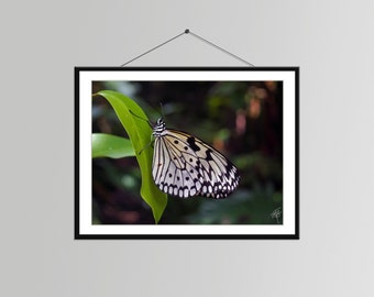 Butterfly on a Leaf in Singapore // Butterfly Photo - Butterfly Wall Decor - Butterfly Bedroom Art - Nature Photography - Butterfly Picture