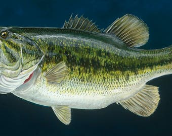 Largemouth on Blue - Limited Edition Giclee Reproduction