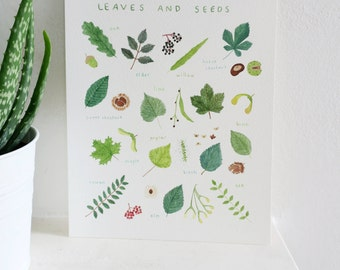 British Trees Identified by their Leaves and Seeds - 8 x 10 Print - Nature Lovers Gift
