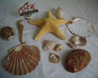 Star of sea, shell, cowries, Hippocampus, abalone, St Jacques, collection of the sea,
